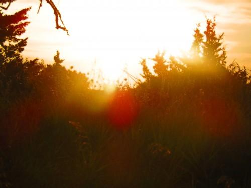 Sunset Grass 4 PS