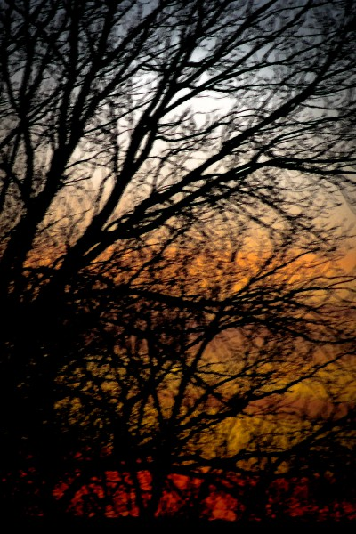 Beetison Sunset 12-Eklund PS