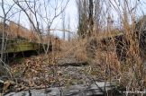 Overgrown Train Track