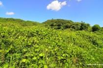 Overgrown Spoil-Tips - botayama - ボタ山