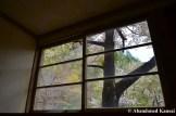 Sakura Through Broken Window