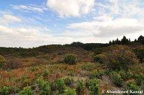 Overgrown Mount Atago Ski Resort