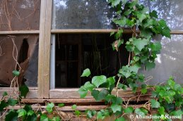 Partly Overgrown Windows