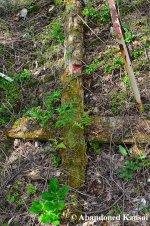 Abandoned, Rotting Totem Pole
