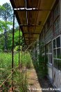 Partly Overgrown School