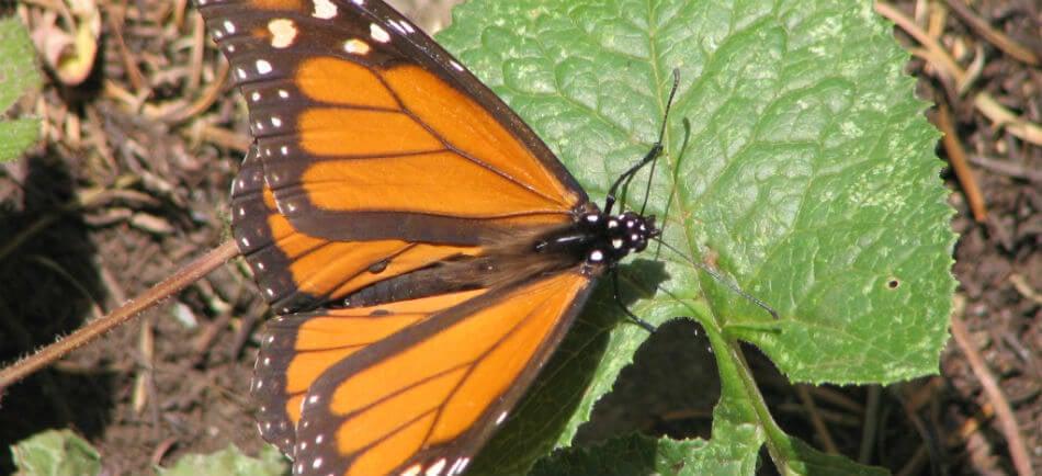 les papillons esthetiques et fragiles