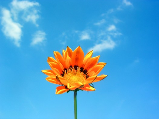 Image of bright orange flower and bright blue sky.