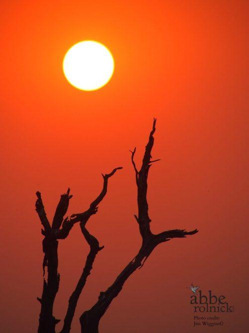 Sunrise by Abbe Rolnick