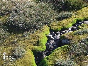 moss rock stream