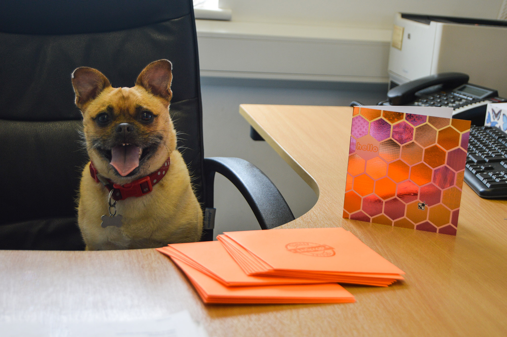 dog and a greeting card
