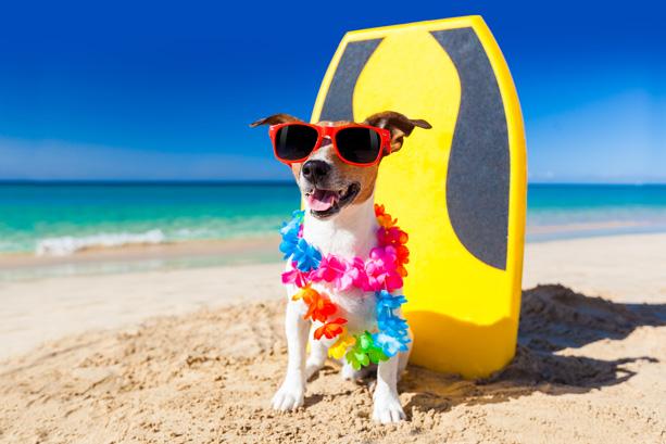 surfer-dog