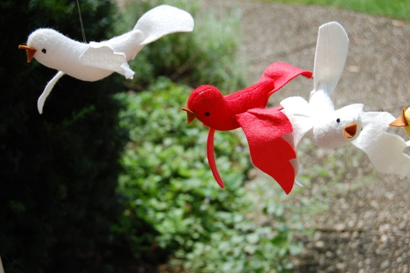 White and red birds