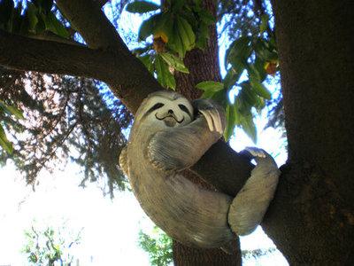 Violetta's sloth