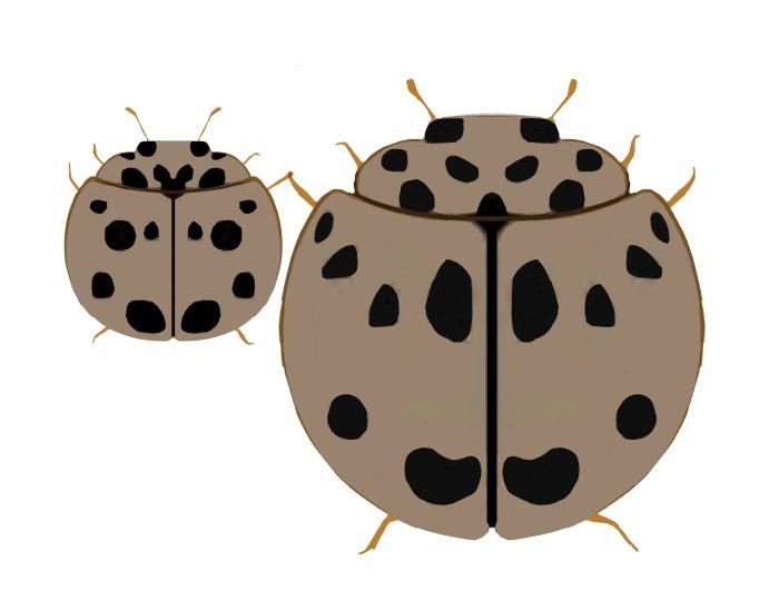 ash grey bugsv2