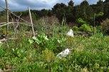 Spring Vegetable Garden Web-4