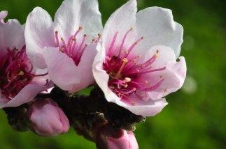 Spring Flowers AbbyVille Web-2