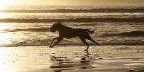 Sunset run on the beach - Photo by James Jubb