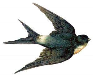 jedna lasta ne čini proleće