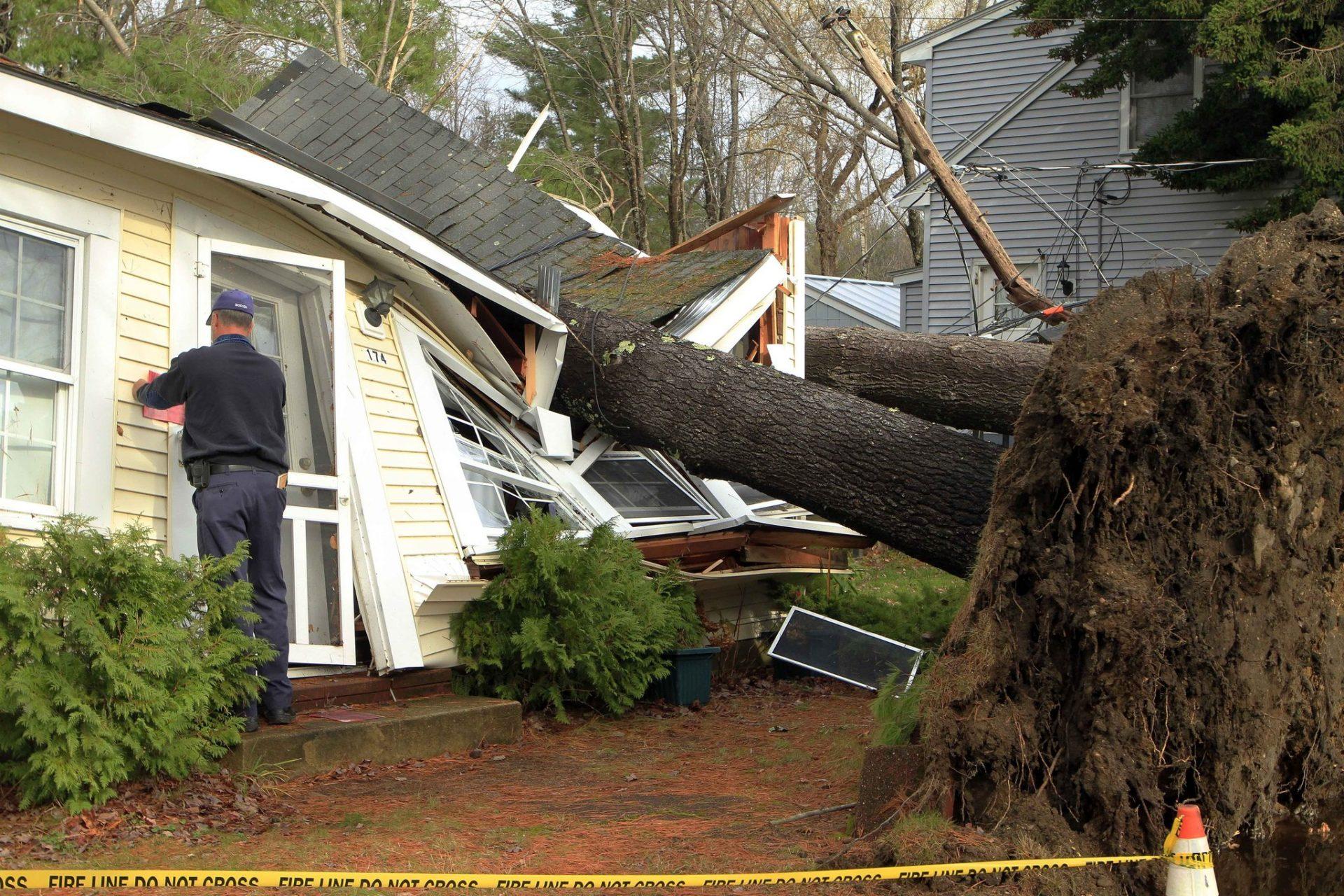 Tree Risk Assessments