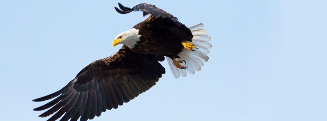 Eagle_SekarB_Shutterstock_blog