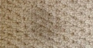 Is Berber a good choice? Berber Stains