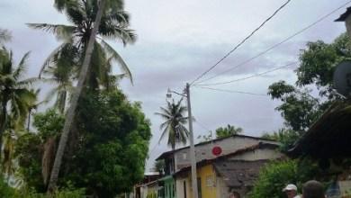 Photo of Dictaminan autoridades tumbar diez palmeras