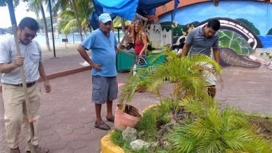 Photo of Pintores siembran plantas de ornato en Plaza del Artista