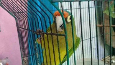 Photo of Ambientalistas buscan estrategia para combatir tráfico de aves