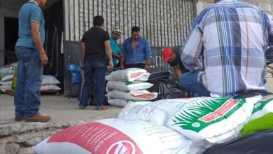 Photo of Todavía no hay fecha para entrega de fertilizante a municipios de la Costa Grande