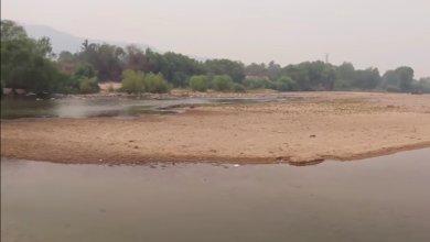 Photo of En riesgo de perderse cientos de hectáreas de plátano por sequía del río de Tecpan