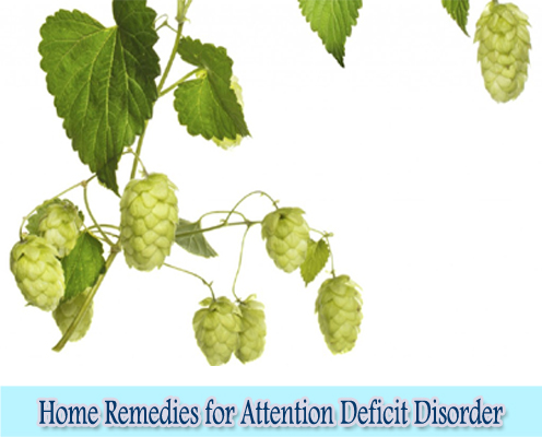 Hops : Home Remedies for Attention Deficit Disorder