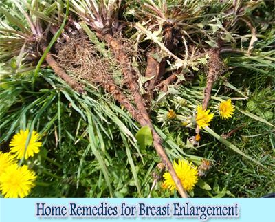 Dandelion Root : Home Remedies for Breast Enlargement