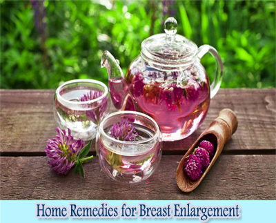 Red Clover : Home Remedies for Breast Enlargement