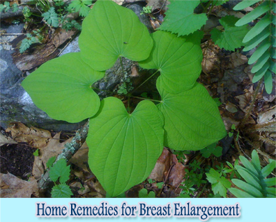 Wild Yam : Home Remedies for Breast Enlargement