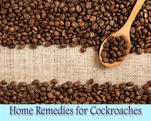Coffee Grounds : Home Remedies for Cockroaches