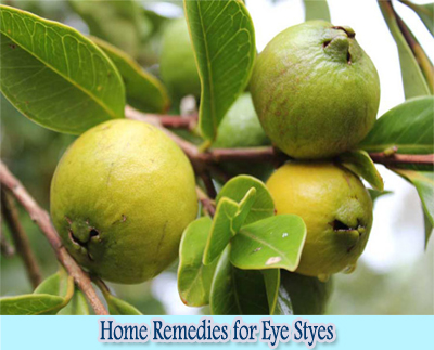 Guava Leaves : Home Remedies for Eye Styes