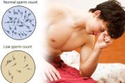 Home remedies for Increase Sperm Count