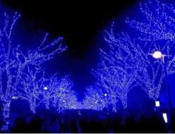 おでかけ | 青の洞窟 | 高品質で安いネイルサロンABCネイル 池袋店