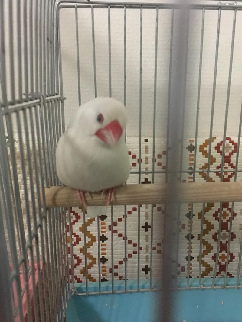 グルメ | 文鳥 | 高品質で安いネイルサロンABCネイル 池袋店