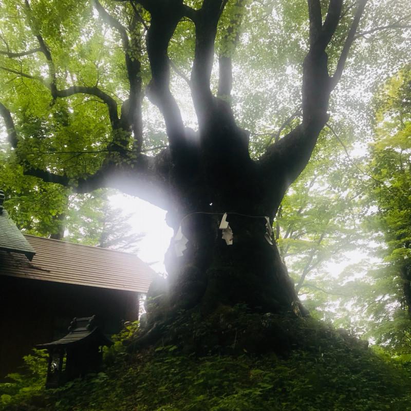おでかけ | 熊野皇太神社| 高品質で安いネイルサロンABCネイル 大宮店