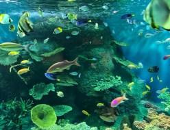 おでかけ | 水族館 | 高品質で安いネイルサロンABCネイル 新宿店