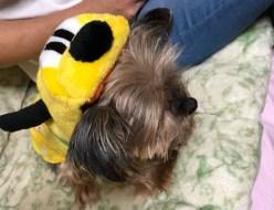 ペット | 犬 | 高品質で安いネイルサロンABCネイル 北千住店