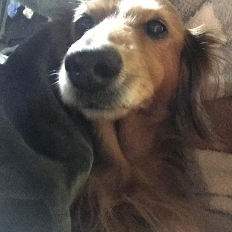 癒し | 愛犬 | 高品質で安いネイルサロンABCネイル 新宿店