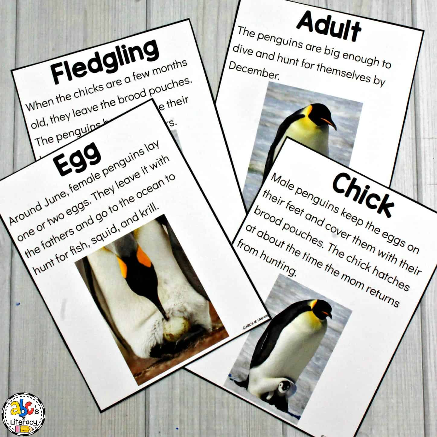 Penguin Life Cycle Lesson Plan
