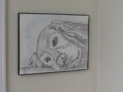 labrador pencil sketches (9)