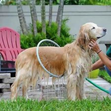 Perfect Dog Washing Station 360 Degree Shower