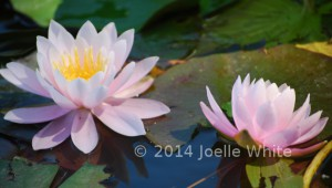 140708_Lotus3MRW
