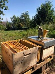 parrainage-ruche-vosges-nord.jpg