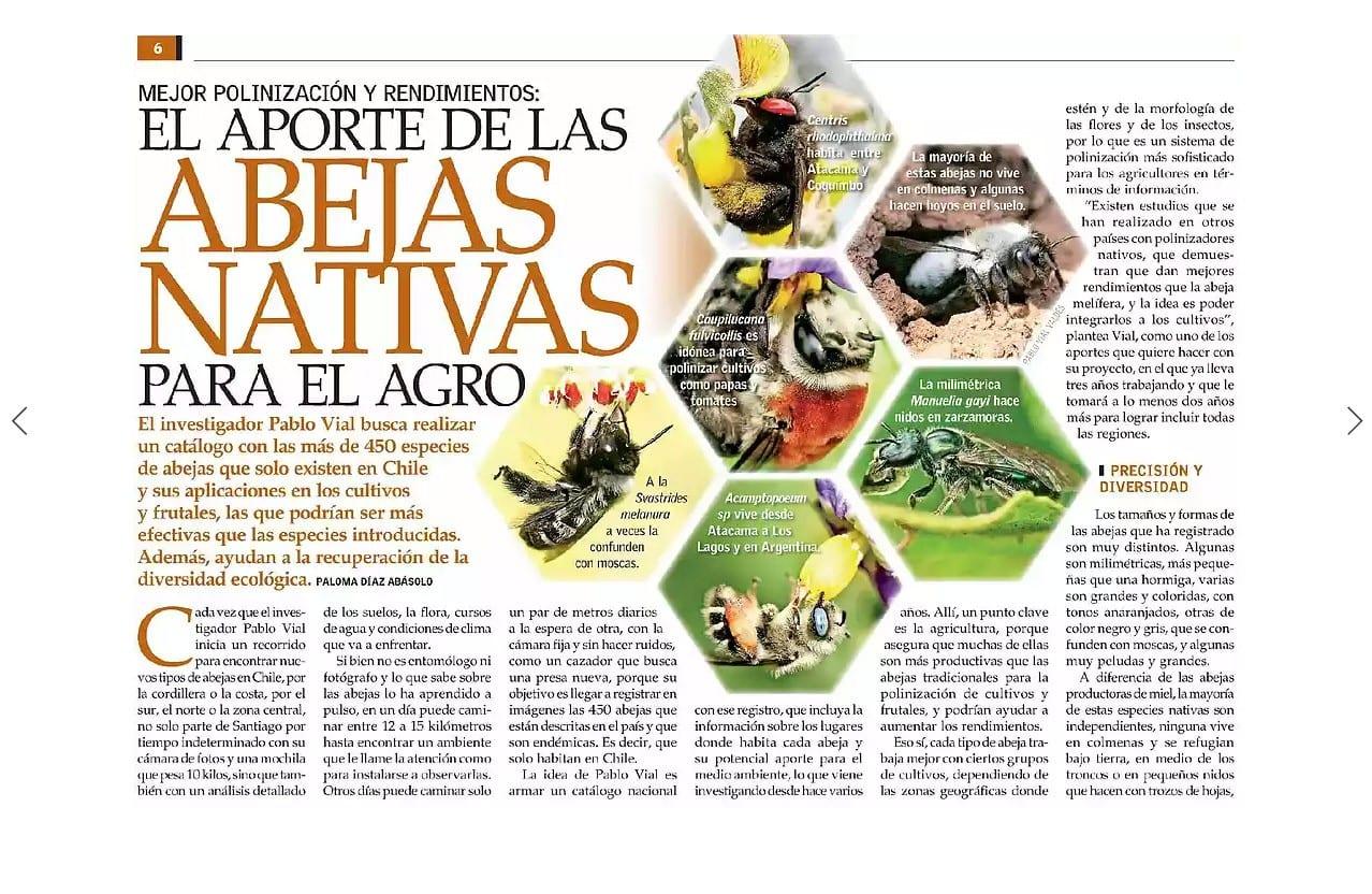 La importancia de las abejas nativas para la agricultura