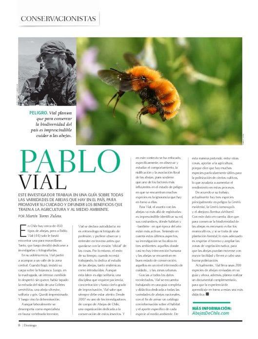Investigador Pablo Vial Valdés lleva años estudiando las ciencias básicas de las abejas y registros para hacer un libro de las abejas nativas